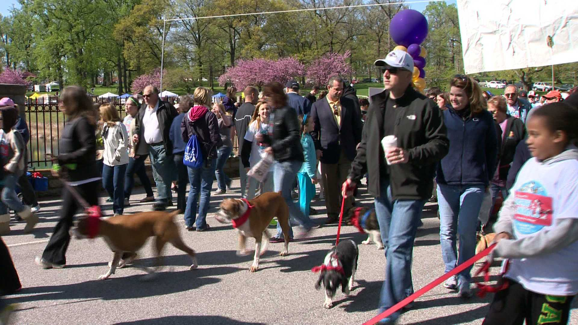 Hundreds gather in Druid Hill Park to kick off the 18th annual Maryland SPCA March for the Animals.