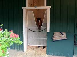 Trainer Doug O'Neill's horse, Goldencents, is confirmed for the Preakness and is the first to arrive at Pimlico.
