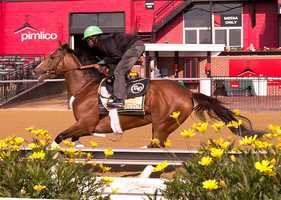 Goldencents runs at Pimlico