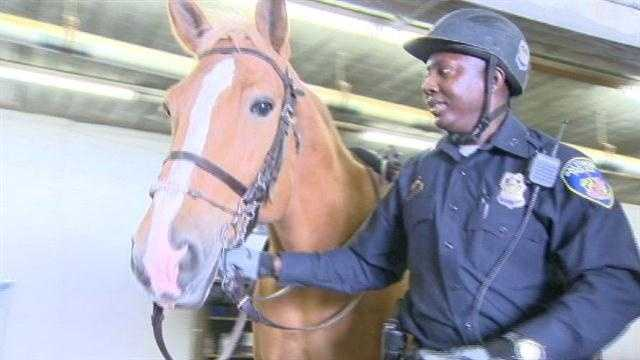There are plenty of horses in Baltimore this week for the Preakness, but there are some that are permanent residents of the city. They're part of the Baltimore City Police Mounted Unit.