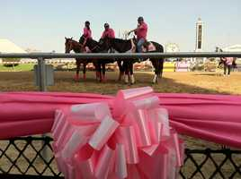 Pink on Black-Eyed Susan Day