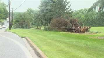 In northeastern Baltimore County along Harford Road and Fork Road, giant trees were toppled over.