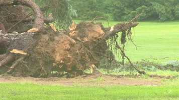 """Laurie Herring was home at the time the storm hit near the Fork Methodist Church and said it looked and sounded like a tornado. """"When I looked out my kitchen window, I saw everything just blowing like I've never seen before, and I could hear this horrendous roar,"""" she told 11 News."""