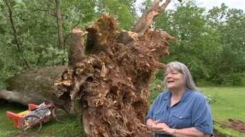 Donna Sizemore, who owns the property, said the 380-year-old tree was healthy. Judging by its size, it's remarkable no one was hurt.