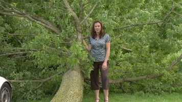 The afternoon storm on Thursday also knocked down a much smaller oak tree on the Sizemore property. It didn't hit anything important, either, 11 News' Jennifer Franciotti reported.