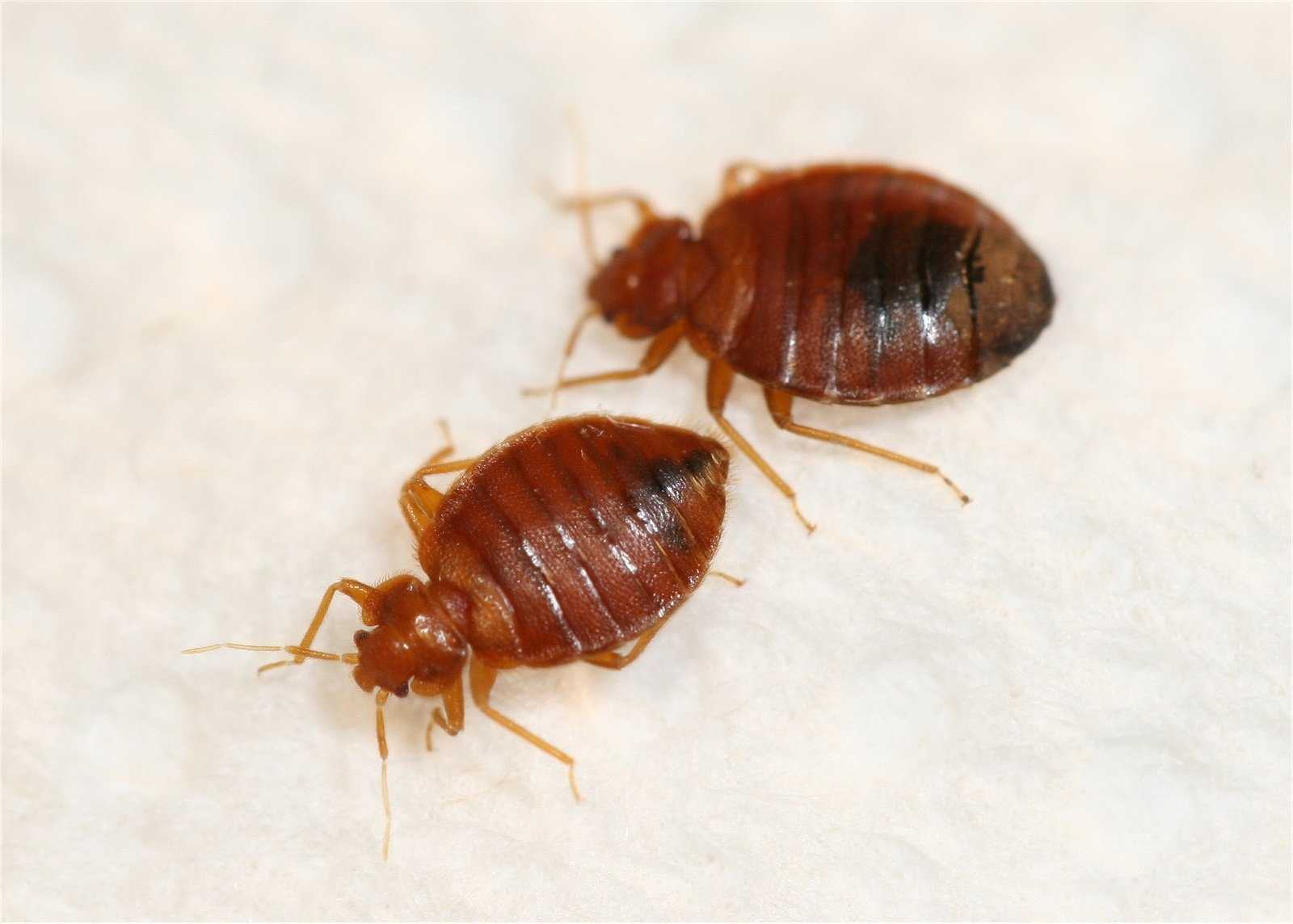 Bedbugs Found In 34 Naval Academy Dorm Rooms Part 51