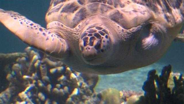 One of the National Aquarium's biggest and most popular exhibits that has been closed for since last fall has reopened after undergoing major renovations and upgrades.