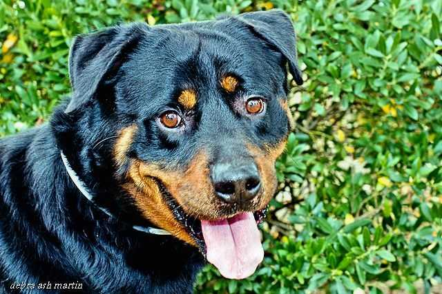 """The """"Adopt-A-Thon"""" will feature adoptable animals from Anne Arundel County Animal Control and other rescue groups, shelters and clinics."""
