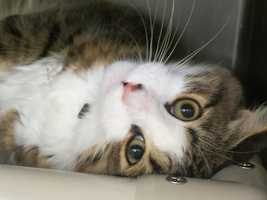 """The Anne Arundel County Animal Control has scheduled an """"Adopt-A-Thon"""" on Saturday, Sept. 14, from 10 a.m. until 3 p.m."""
