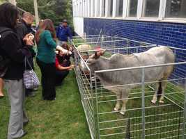 WBAL-TV's sister radio station, 98 Rock, held an appreciation day for morning show host Josh Spiegel, so they brought in a petting zoo for him and other employees to enjoy!
