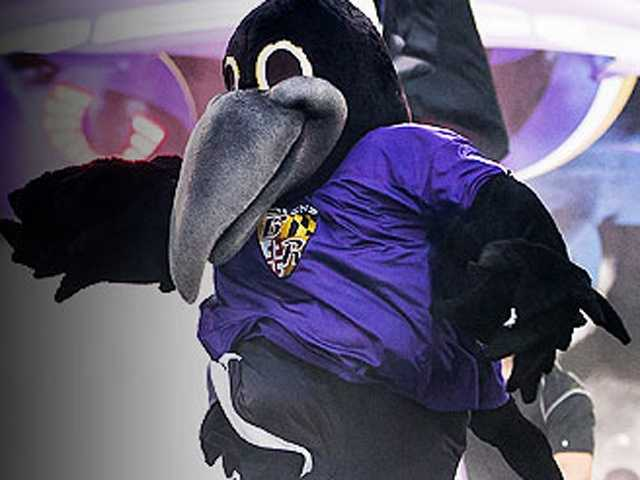 The Ravens' mascot is Poe.