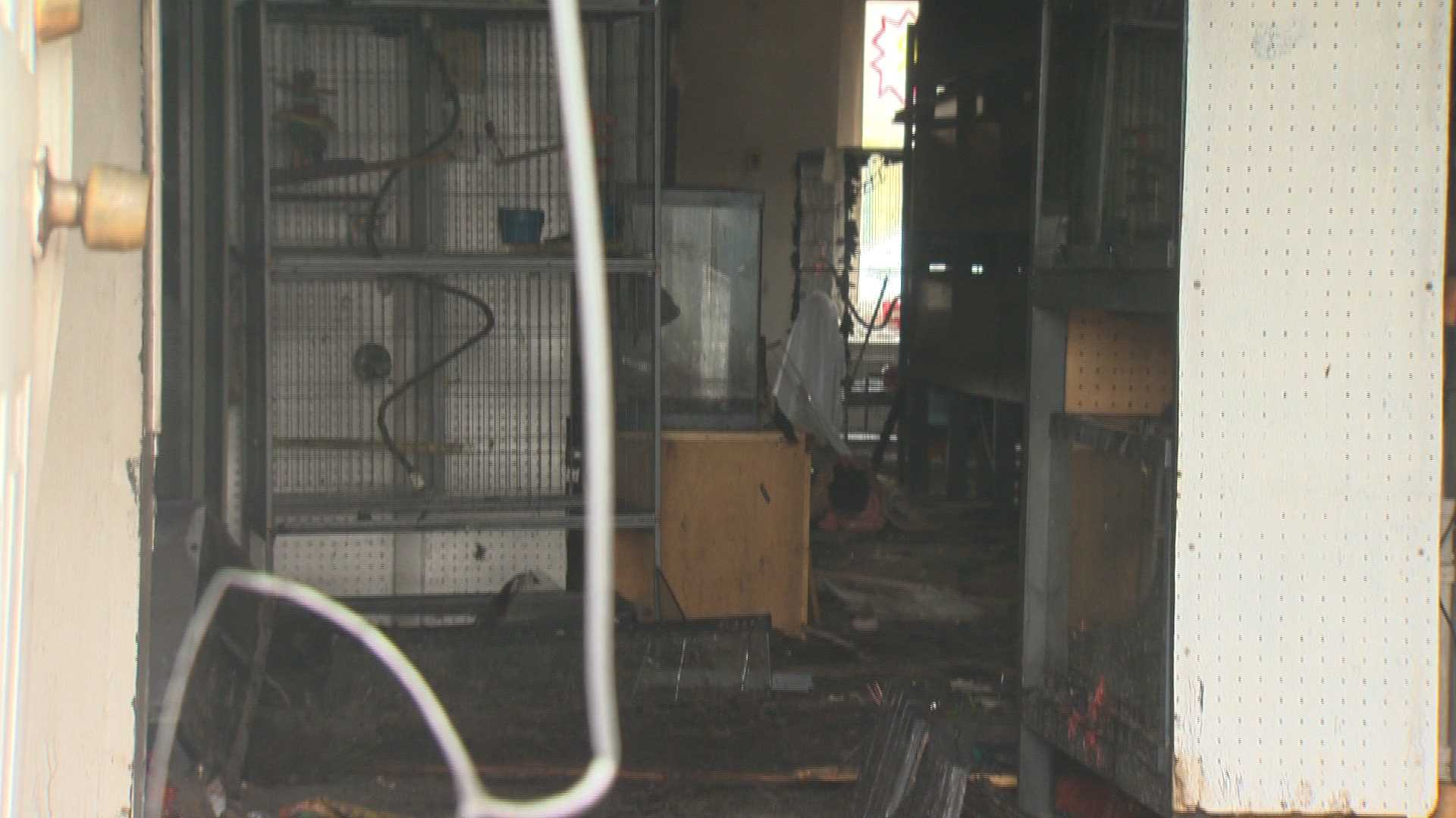 pet shop fire- inside