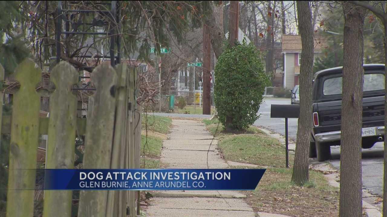 dog attack.jpg