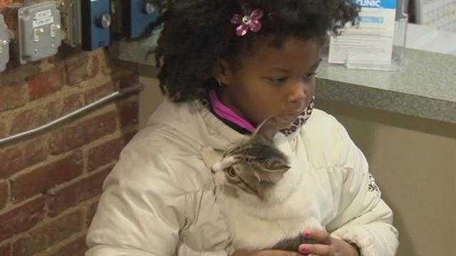 cute kitty at Maryland SPCA