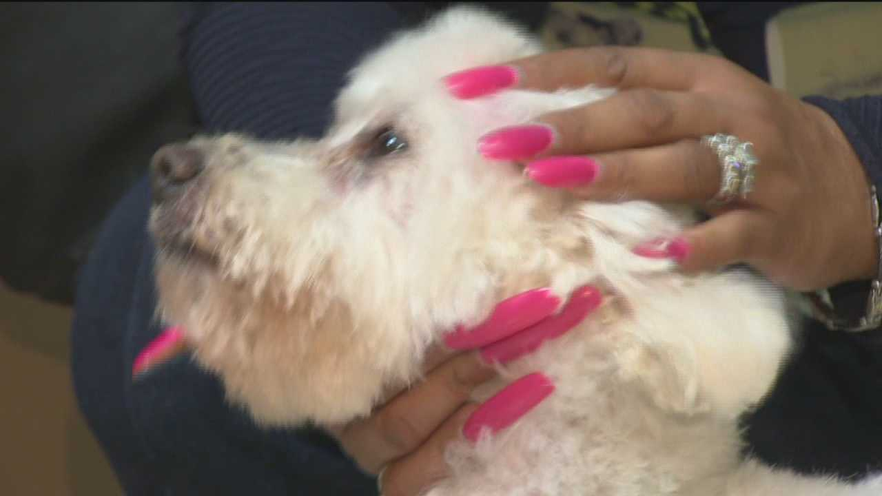 Missing dog shows up 7 years later