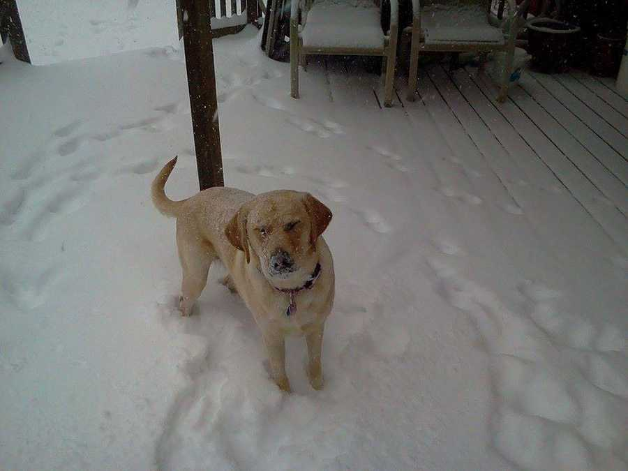"Penny playing in the snow in Hampstead. ""We now have over 8 inches and it's still coming down,"" Betty Leatherwood Bolm said."