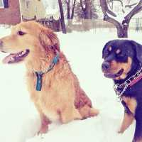 Heather Jacobs' pups play in the snow in Glen Burnie.