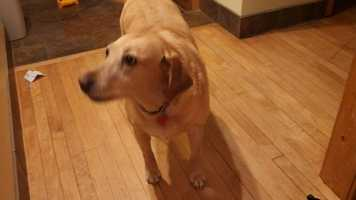 Jason is married with two sons, ages 6 and 4, and his family has a pet yellow lab.