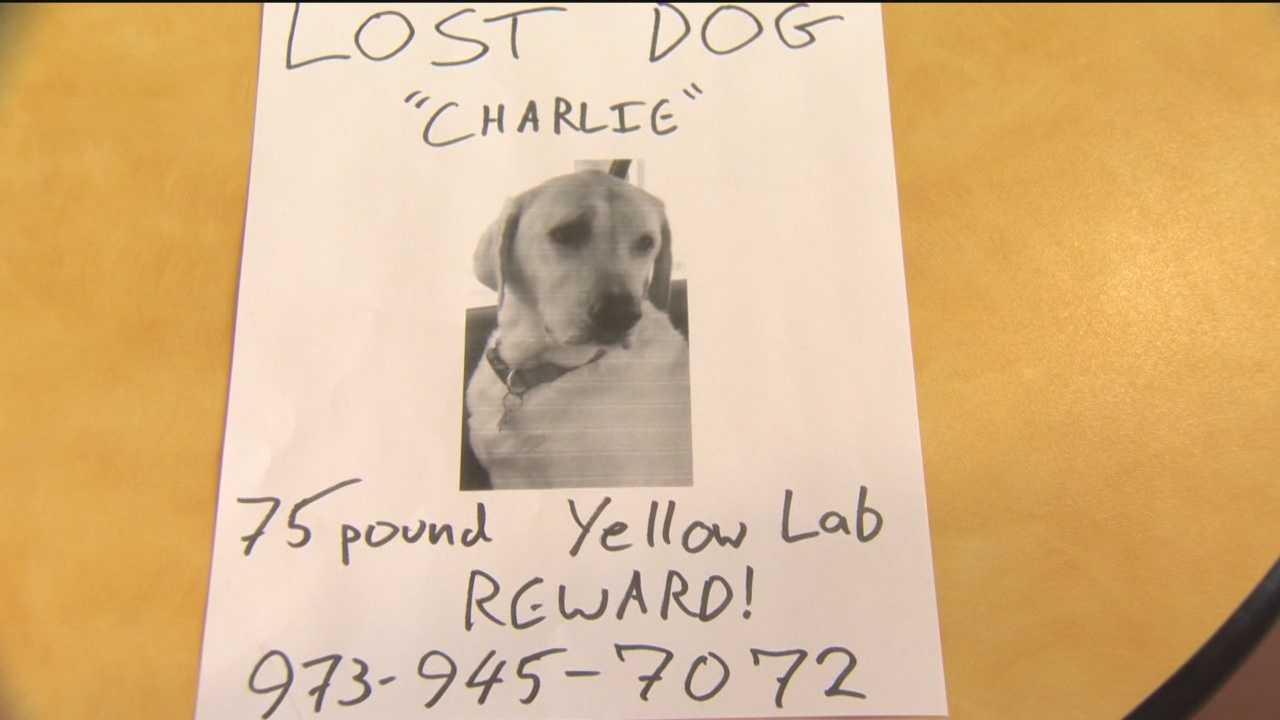Dog missing after escaping crash on I-95