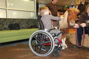 Colt is a fairly new member of the institute's Animal Assisted Therapy Team, which lets animals interact with patients during traditional therapy to help them achieve their therapy goals.