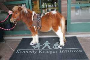 The Kennedy Krieger Institute in Baltimore is getting a special visitor Saturday -- a miniature horse named Colt.