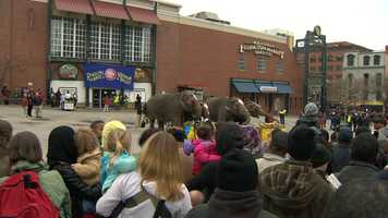 Several people in downtown Baltimore on Wednesday morning got to see an unusual sight -- elephants getting fed in the streets.
