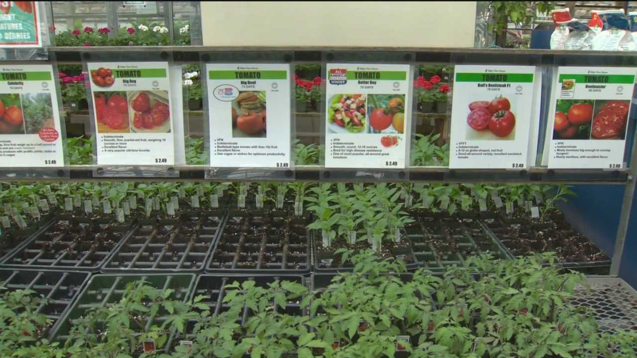 Plant expert advises to take precautions with cold weather
