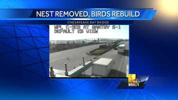 Authority spokesman John Sales says officials got permission to move the nest from the U.S. Fish and Wildlife Service. The nest did not contain eggs or young birds.