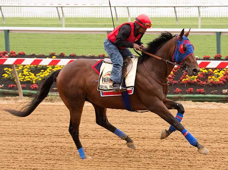 May 9: Until his rivals start arriving on Monday, Social Inclusion will remain the lone Preakness candidate on the grounds.