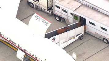 California Chrome, accompanied by Preakness candidates Ride On Curlin and General a Rod, arrives at BWI-Marshall.