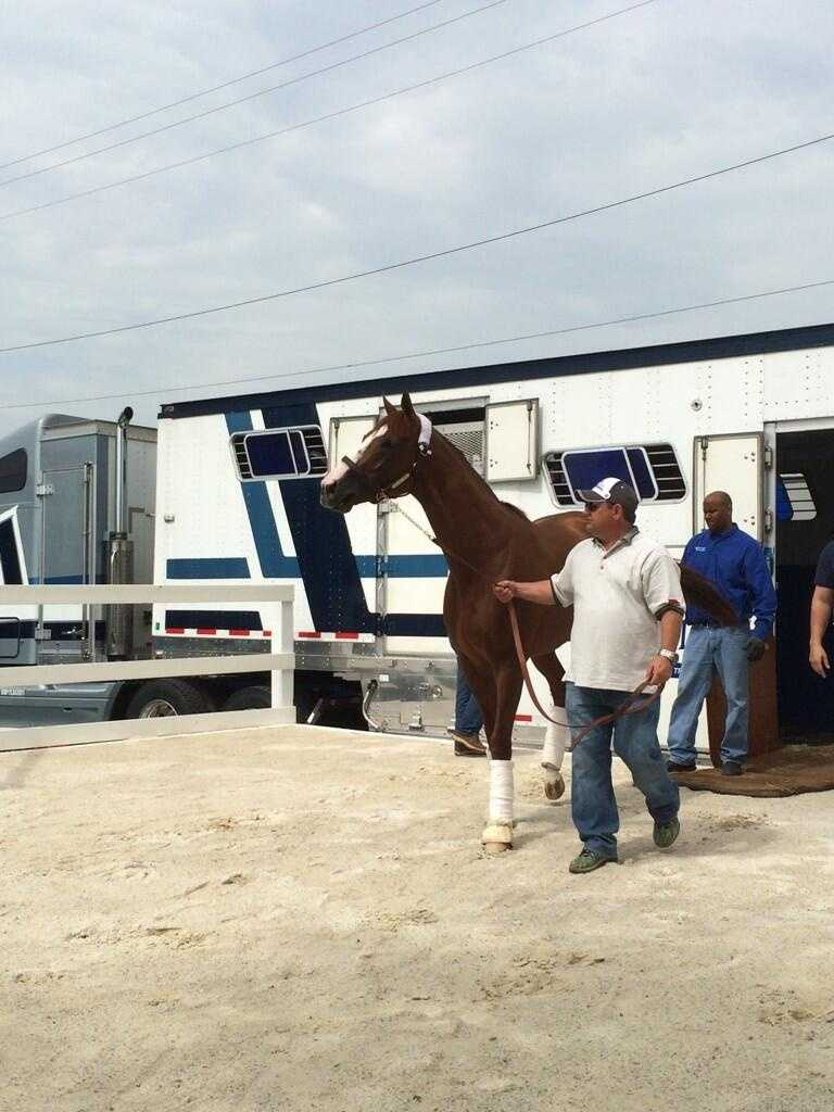 May 12: Kentucky Derby-winner California Chrome arrives at Pimlico Race Course in Baltimore, Maryland