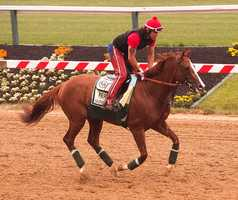 May 13: Trainer Art Sherman was typically upbeat Wednesday morning after watching his Kentucky Derby-winner California Chrome gallop 1 1/2 miles in preparation for Saturday's 139th Preakness Stakes at Pimlico Race Course.