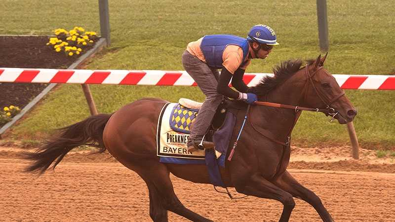 May 15: Hall of Fame trainer Bob Baffert, seeking his sixth Preakness victory, said he would relish having Bayern's rider, Rosie Napravnik, make history as the first female jockey to win Maryland's signature race.