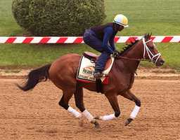 May 15: John Oxley's Dynamic Impact enjoyed an easy first day at Pimlico after arriving from Churchill Downs by galloping 1 1/2 miles under exercise rider Wayne Brown.
