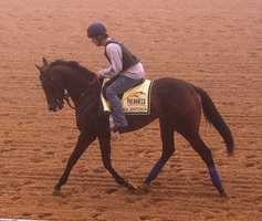 May 15: With exercise rider Maurice Sanchez aboard, the only filly in Saturday's Preakness field, Ria Antonia, jogged a mile in dense fog Thursday morning at Pimlico.