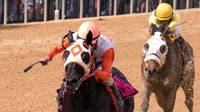 The Jim Stable's Ben's Cat maintains his amazing winning ways Friday at Pimlico, winning the $100,000 Jim McKay Turf Sprint for the third time.