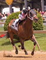 May 17: Sagamore Farm & Mel Palkoff's Happy My Way breaks like a shot and nurses his lead the rest of the way to post an easy score in the Maryland Sprint Handicap.