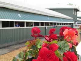 Flowers at the Stakes Barn.