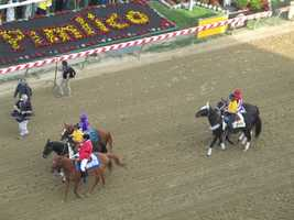 The horses are introduced as they make their way around the track to the starting gates.