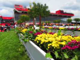 Getting the day started with a great floral view of the grandstands.