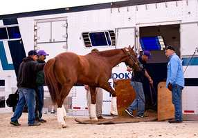 Dual classic winner California Chrome leaves Pimlico Race Course for what is expected to be a four-hour van ride to Elmont, N.Y.