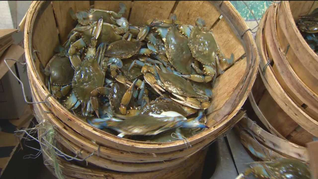 The cold winter and the weather down south are bringing up the prices on crabs.