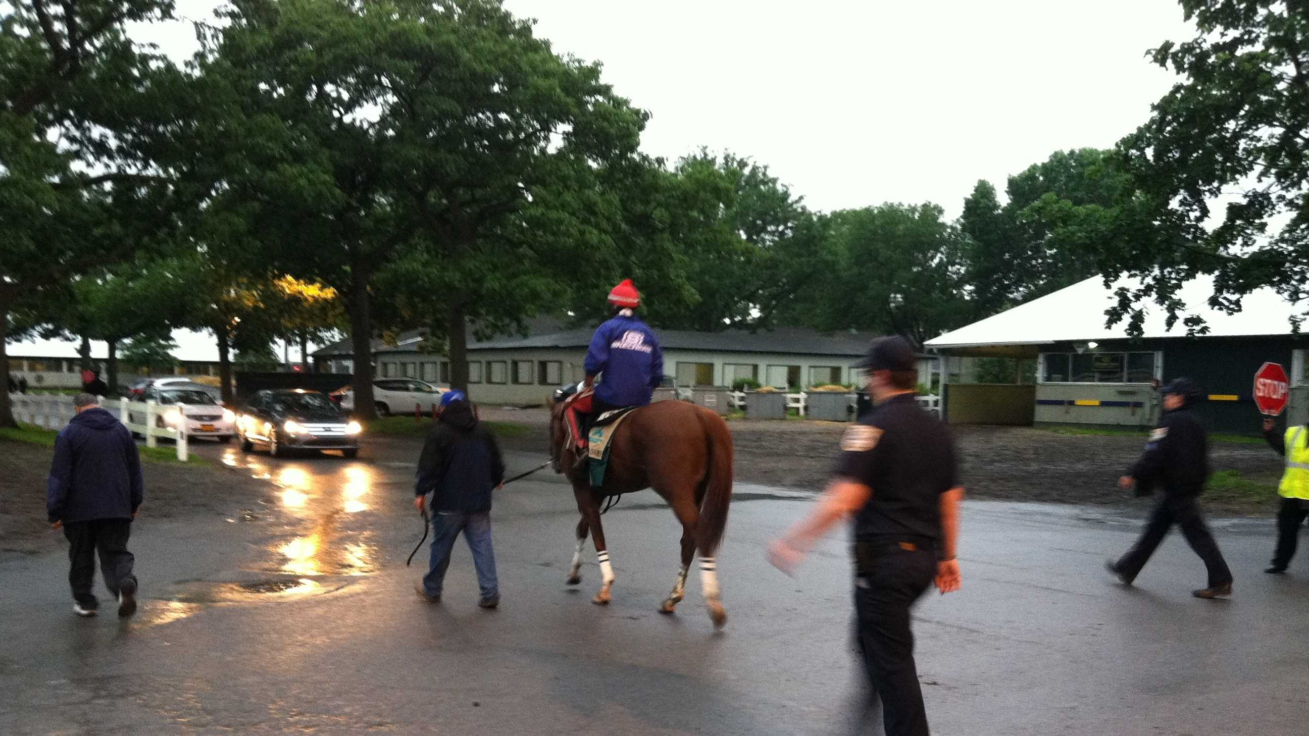 Walking back to the barn after a wet morning at the track for California Chrome