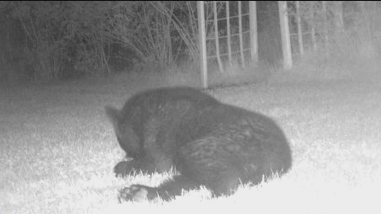 DNR officials said two calls came in for bear sightings in Columbia, including one near Route 29, and two others came from Ellicott City neighborhoods.