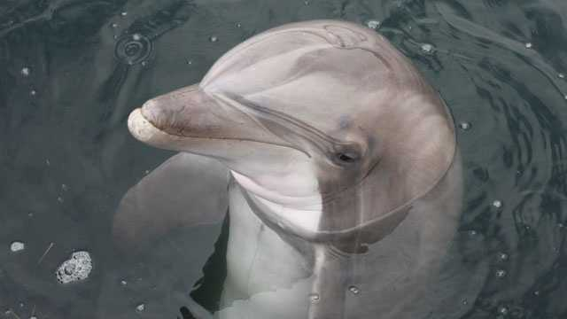 """Mindy's favorite animal is a dolphin """"because they seem kind."""""""