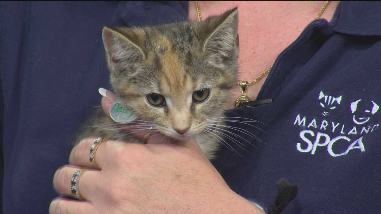 The Maryland SPCA's Katie Flory shares a recipe for cat treats and talks about a special cat adoption program.