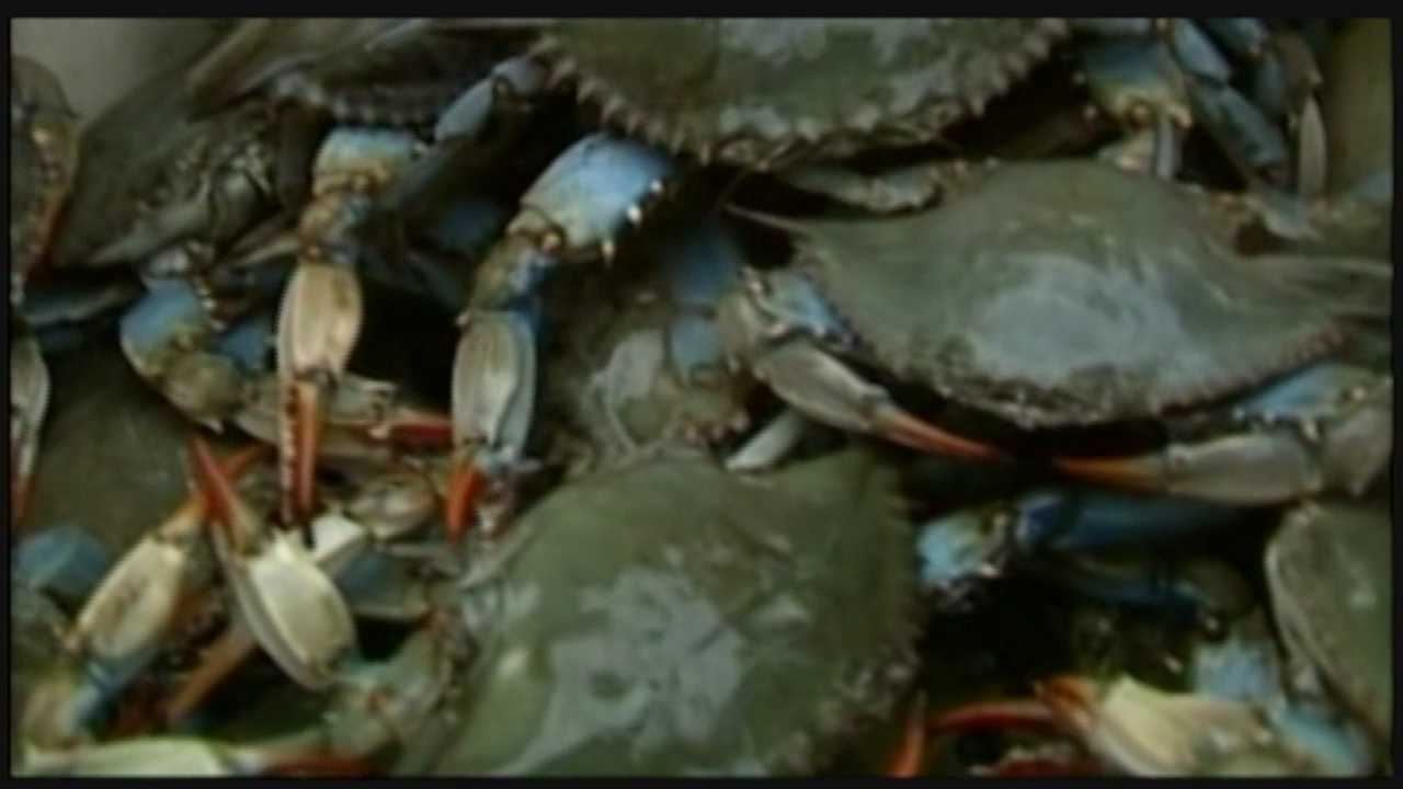 This year's long, cold winter not only affected farming, it also affected blue crabs in the Chesapeake Bay.