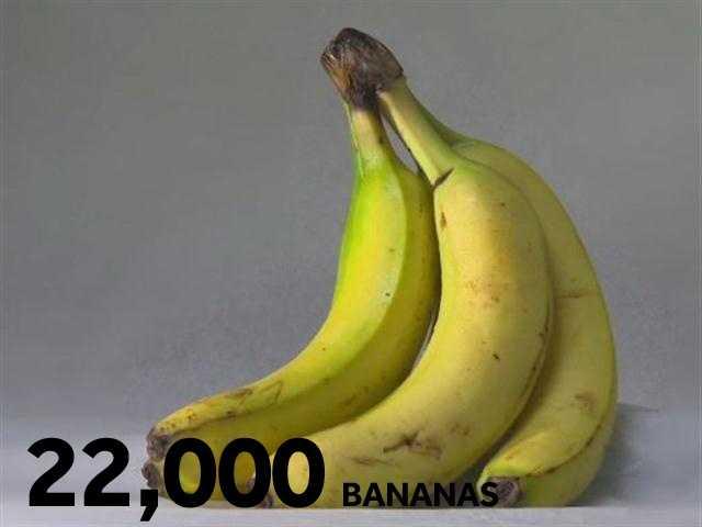 22,000 bananas