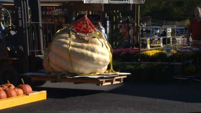 Perhaps a record-setting pumpkin arrives at Valley View Farms ready for the seed-counting contest!