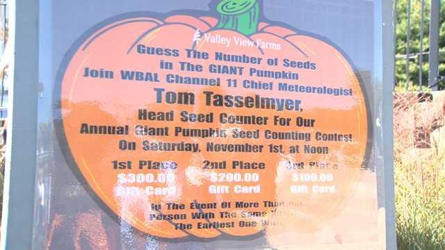 Tom Tasselmyer counts the seeds Nov. 1.